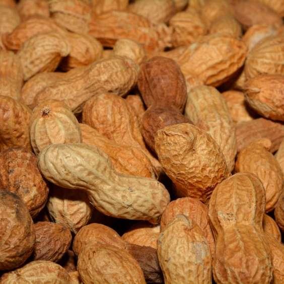 Peanut-Nut-Marceline-MO